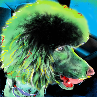 Poodle Pop Art Portrait