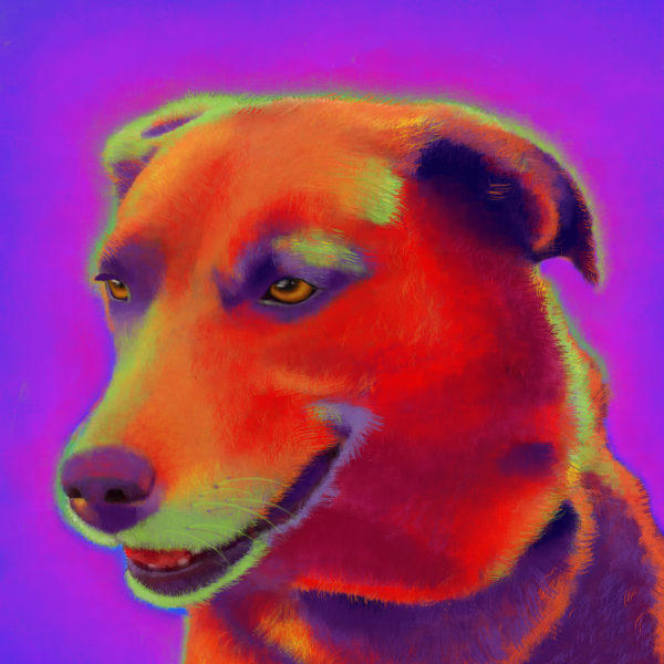 Brown Labrador Custom Pet Portrait