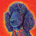 Poodle Digital Custom Painting