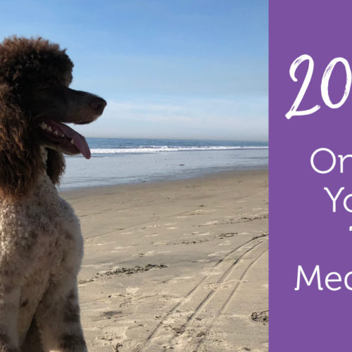 Picture of Pet Medication Tips